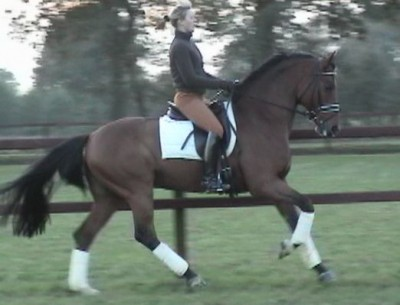 elizabeth werth saddle